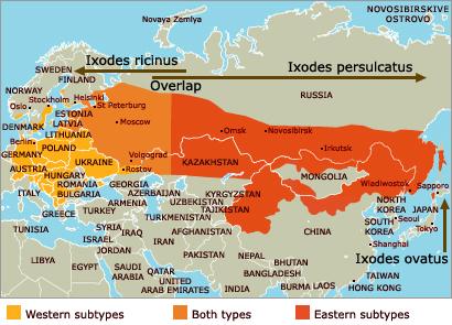 Ixodes ricinus un Ixodes persulcatus izplatība